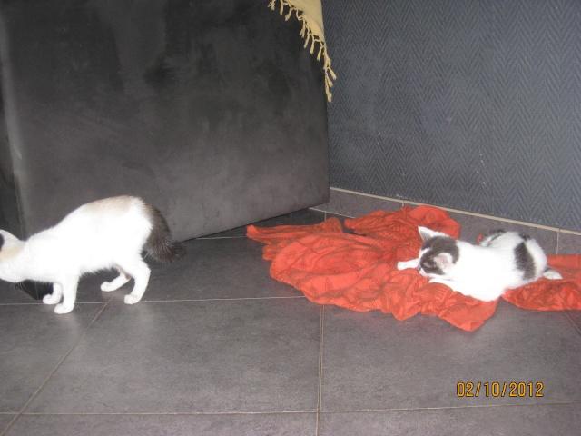 YUMALA, chatonne de 6 mois à l'adoption (77) -F-R-VV-LBC Yumala20