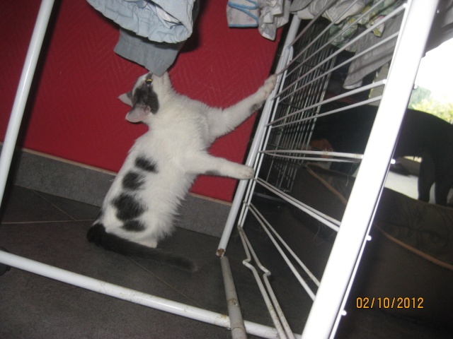 YUMALA, chatonne de 6 mois à l'adoption (77) -F-R-VV-LBC Yumala21