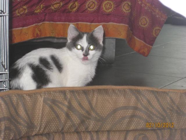 YUMALA, chatonne de 6 mois à l'adoption (77) -F-R-VV-LBC Yumala22