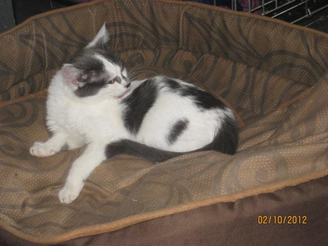 YUMALA, chatonne de 6 mois à l'adoption (77) -F-R-VV-LBC Yumala23
