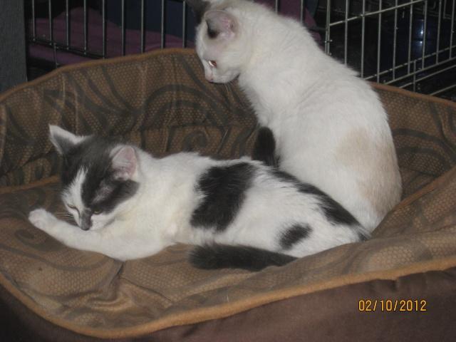 YUMALA, chatonne de 6 mois à l'adoption (77) -F-R-VV-LBC Yumala24