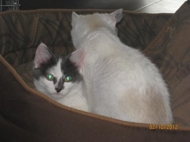 YUMALA, chatonne de 6 mois à l'adoption (77) -F-R-VV-LBC Yumala26