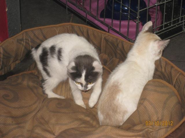 YUMALA, chatonne de 6 mois à l'adoption (77) -F-R-VV-LBC Yumala27
