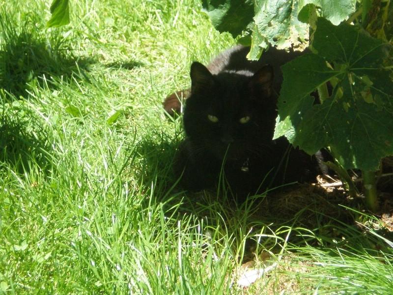 Titi (européen noir) P6132210