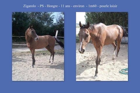 Zigaro adorable PS hongre de 11 ans Asso_z10