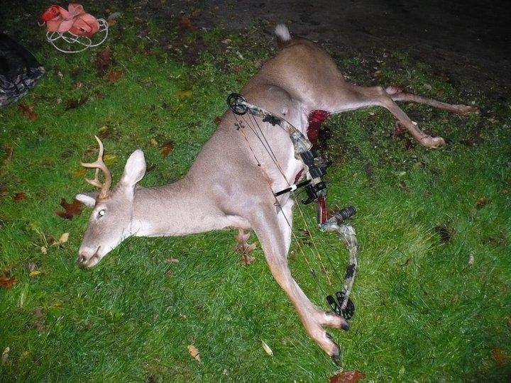 small rack/big body deer  40888_11