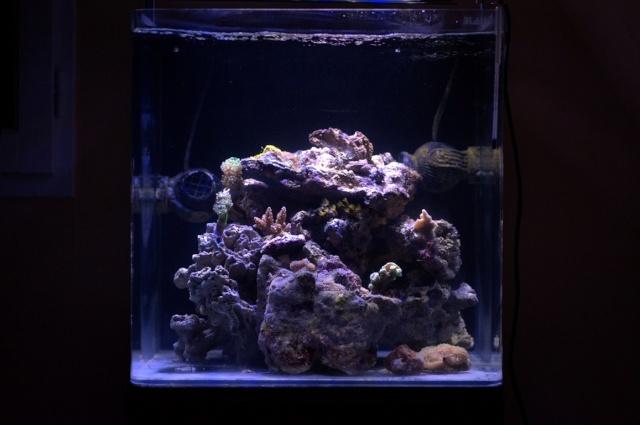 Mon Open Reef 91 - Nouvelle Vidéo p13 - Photos de macro p10 - Page 2 _dsc6210