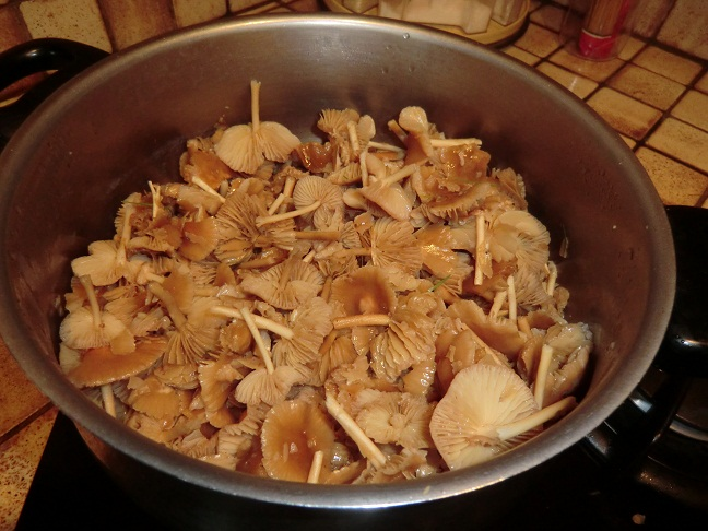 les champignons vont sortir Cimg0914