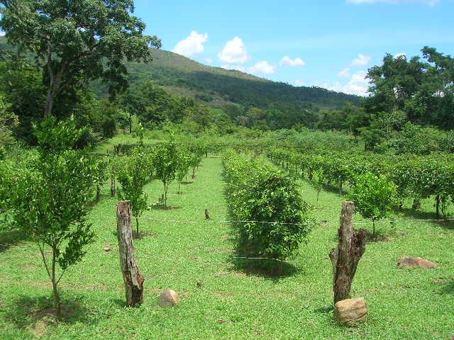 Mon Jardin Venezuelien Cultiv15