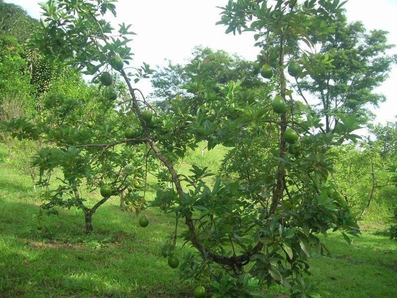 Mon Jardin Venezuelien Dscn5416