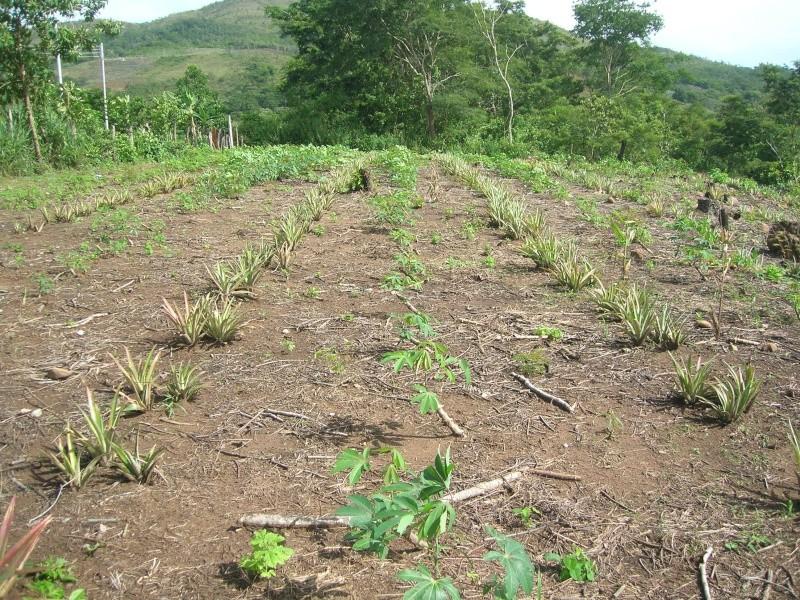 Mon Jardin Venezuelien Dscn5421