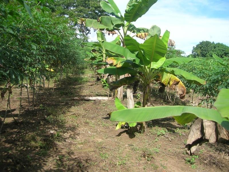 Mon Jardin Venezuelien Dscn5424