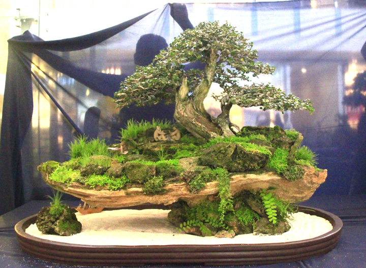 Penjing show - Page 2 _mg_2213