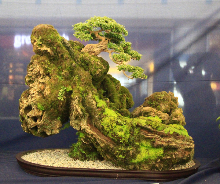 Penjing show - Page 2 _mg_2215