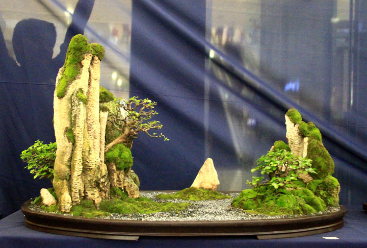 Penjing show - Page 2 _mg_2216