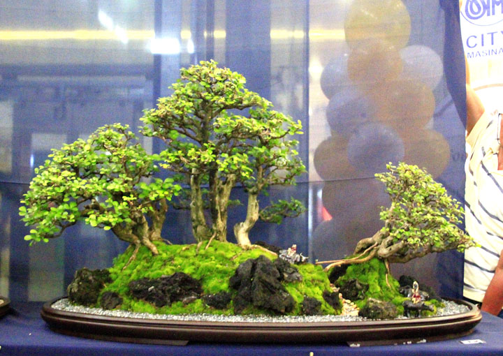 Penjing show - Page 2 _mg_2218