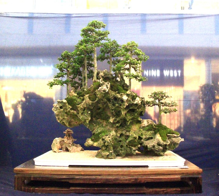 Penjing show - Page 2 _mg_2219