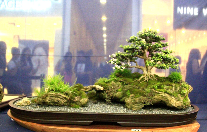 Penjing show - Page 2 _mg_2311