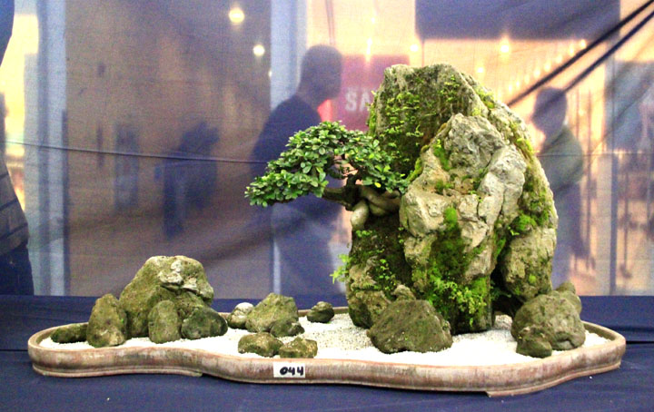 Penjing show - Page 2 _mg_2312
