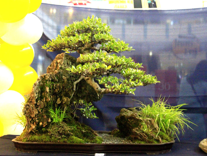 Penjing show - Page 2 _mg_2314