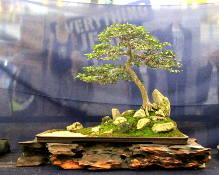 Penjing show - Page 2 _mg_2317