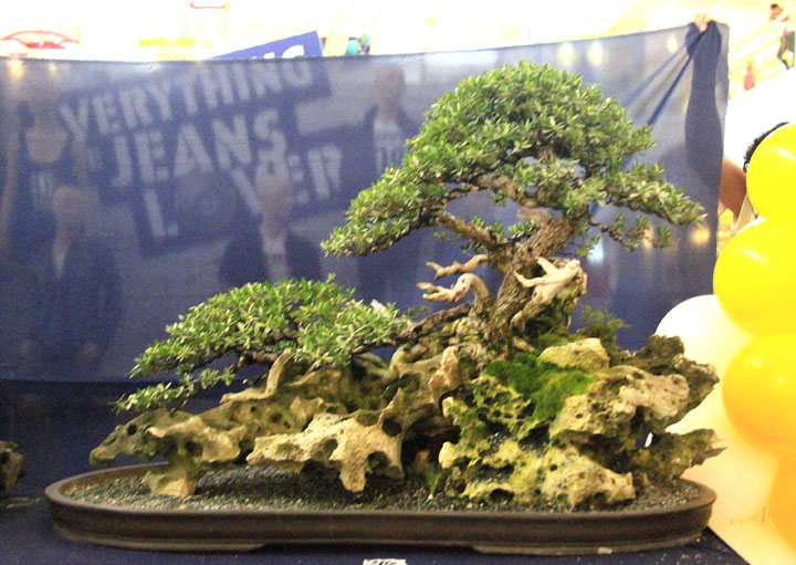 Penjing show - Page 2 _mg_2318