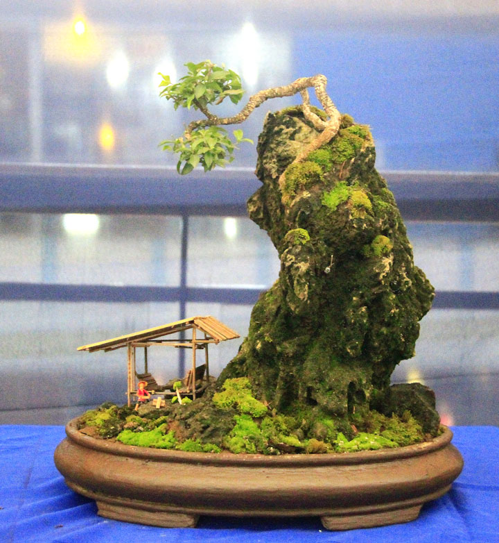 Penjing show - Page 2 _mg_2321