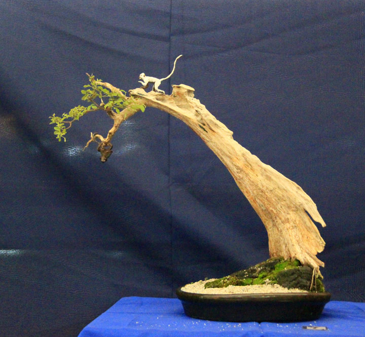 Penjing show - Page 2 _mg_2322