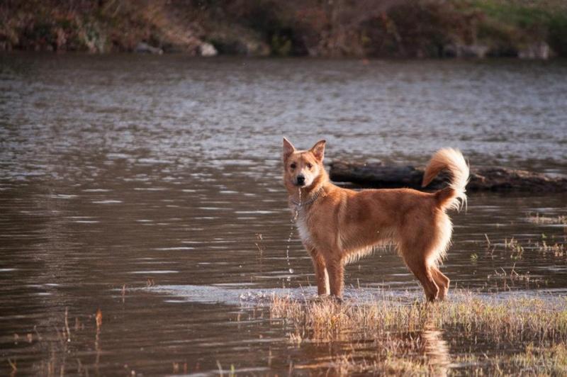 Photo de nos chiens batards! 30279310