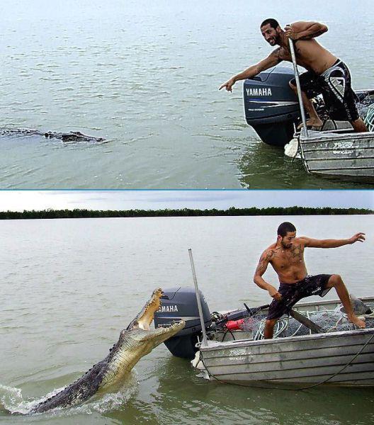 Quand tu joues le kéké avec l'alligator Ne-pas10