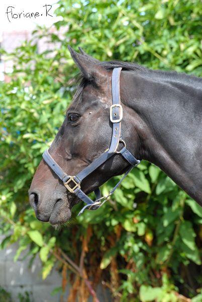 Passion chevaux et photographie... Fate_s10
