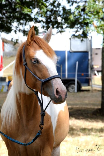 Passion chevaux et photographie... Fate_s11