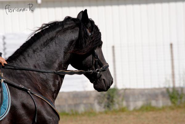 Passion chevaux et photographie... Fate_s13