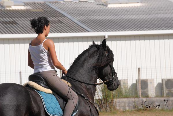 Passion chevaux et photographie... Fate_s14
