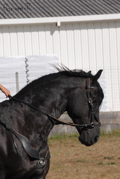 Passion chevaux et photographie... Fate_s15