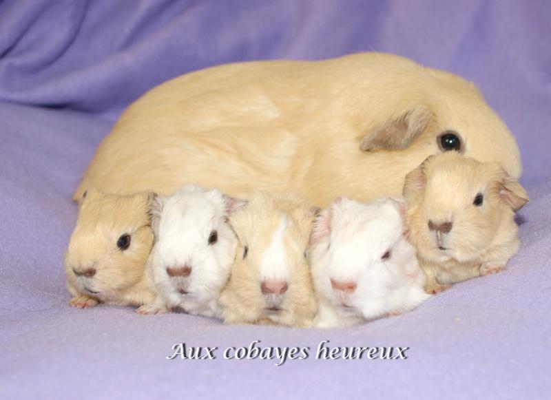 Guigels  UPL crème clair et ses 5 filles née le 27 septembre Dsc06910