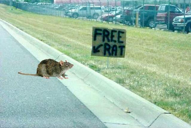 Free Cat's avatar Free_r10