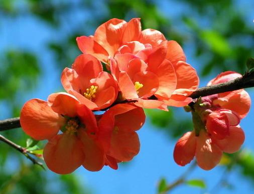Мир цветов, растений, деревьев - Page 2 313
