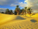 Красота Пустыни 510