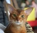Кошки (Cats) S-600010