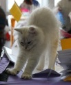 Кошки (Cats) S-601710
