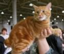 Кошки (Cats) S-604411