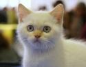 Кошки (Cats) S-607710