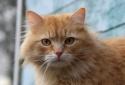 Кошки (Cats) S-622010