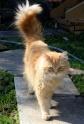 Кошки (Cats) S-642710