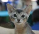 Кошки (Cats) S-653810