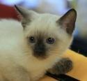 Кошки (Cats) S-657610