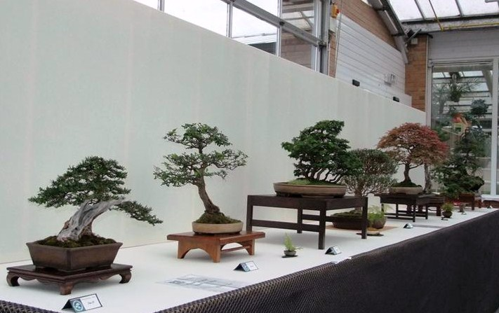 Wirral Bonsai Society Annual Members Show Result 2012 Dscf2525
