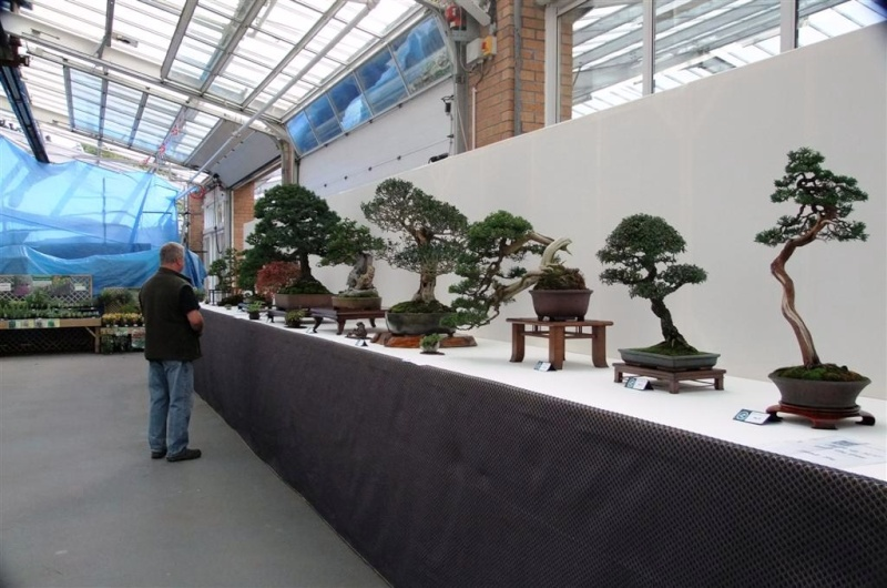 Wirral Bonsai Society Annual Members Show Result 2012 Dscf2610