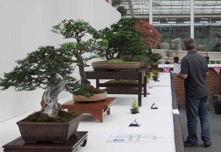 Wirral Bonsai Society Annual Members Show Result 2012 Dscf2613
